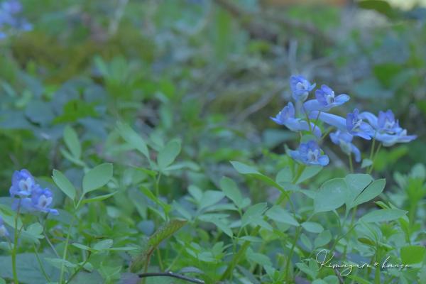 4月、神之瀬にハマる②**小さな青い花園_b0197639_18073677.jpg