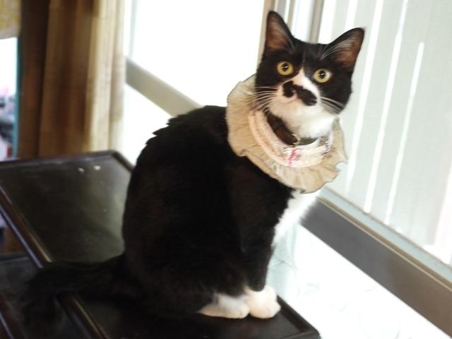 猫のお留守番 てぶくろちゃん編。_a0143140_23090990.jpg