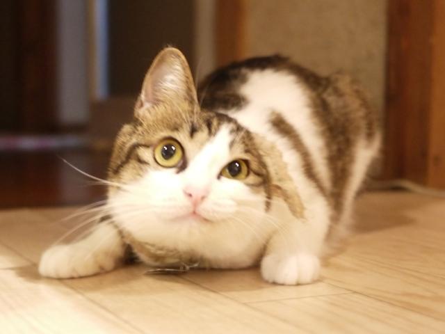 猫のお留守番 羽ちゃん編。_a0143140_23192967.jpg
