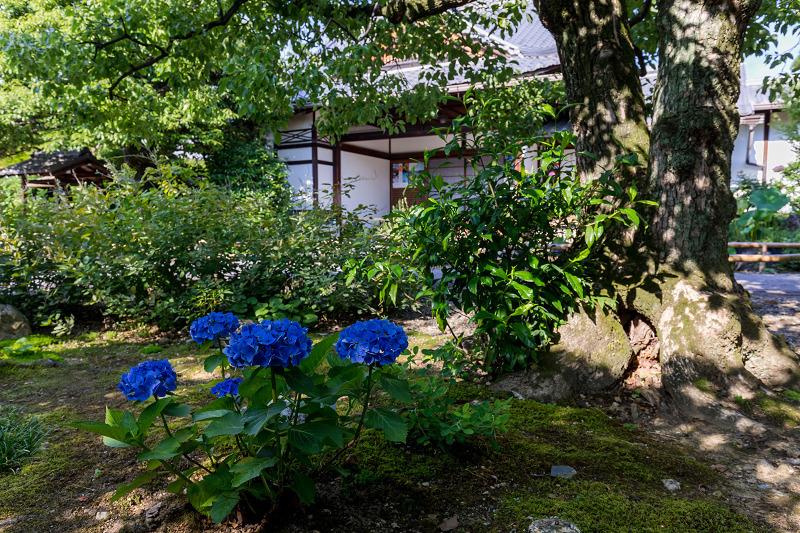 夏の花咲く上品蓮台寺_f0155048_22320939.jpg
