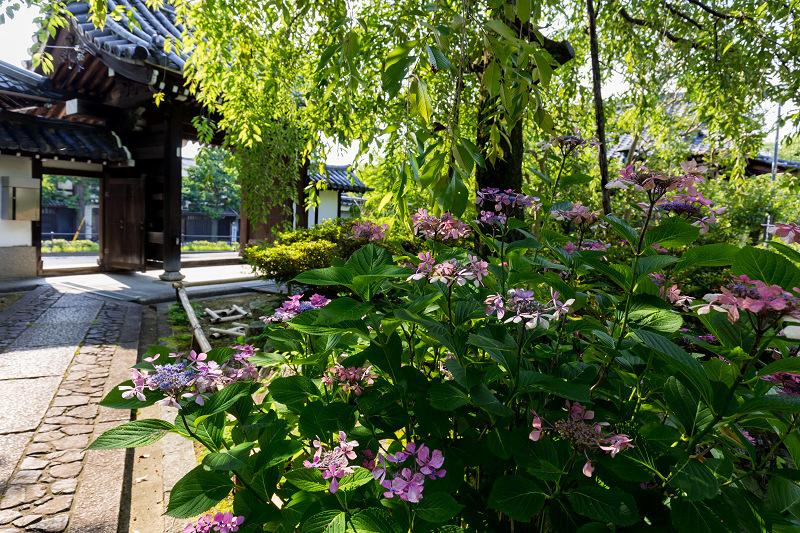 夏の花咲く上品蓮台寺_f0155048_22322357.jpg