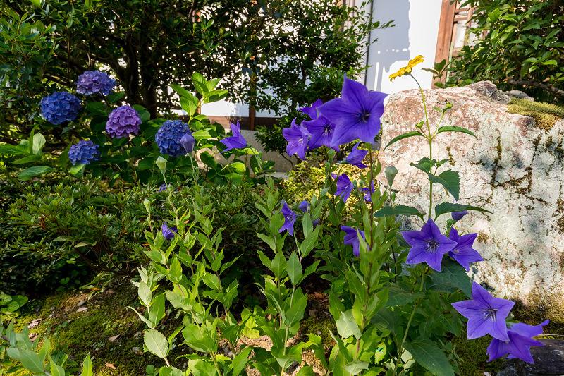 夏の花咲く上品蓮台寺_f0155048_22322610.jpg