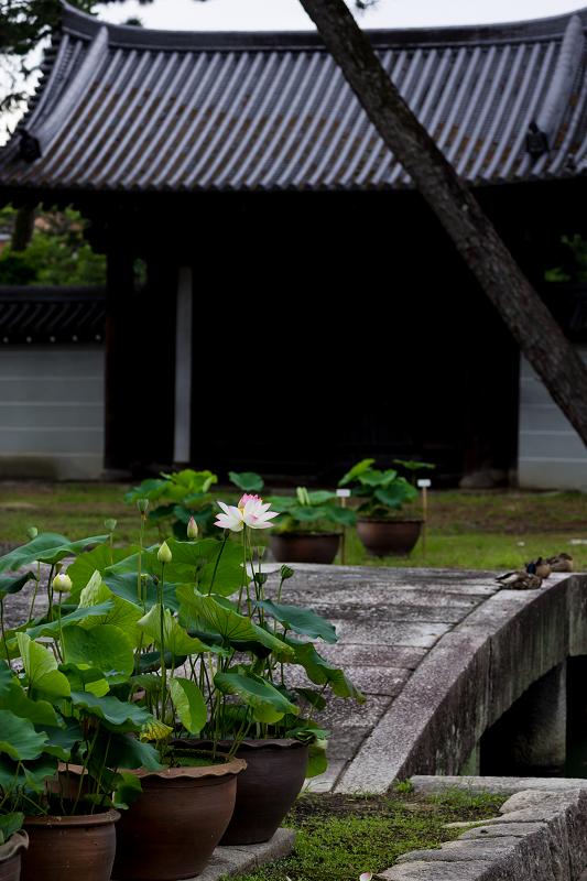 夏の花咲く上品蓮台寺_f0155048_22324889.jpg