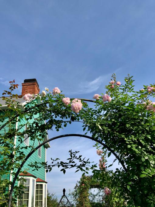 汗をかかないとダメ病かも(^∇^)と秋の訪れ♡ - 薪割りマコのバラの庭
