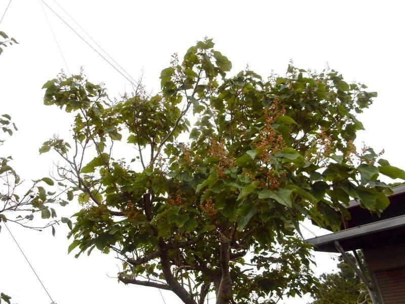 樹木の実_e0024554_20551111.jpg