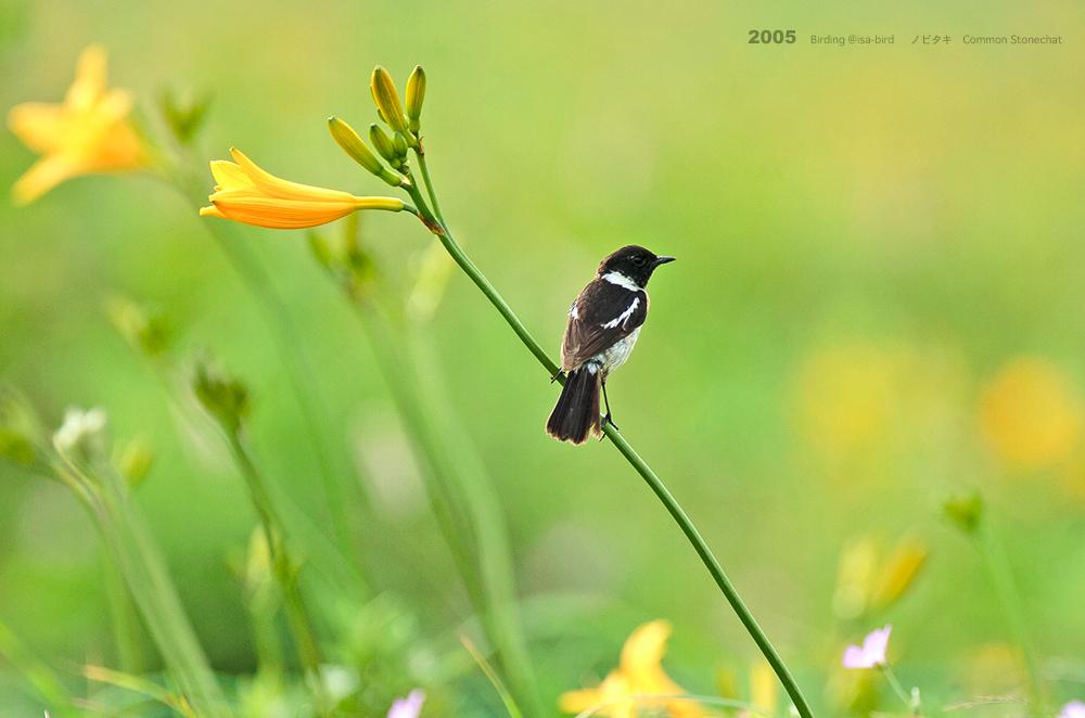 Archive❺ 2005  < 夏 > isa-bird_d0164892_23595059.jpg