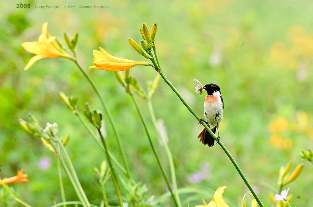 Archive❺ 2005  < 夏 > isa-bird_d0164892_23595167.jpg