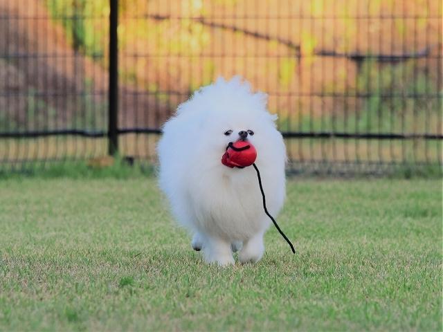 忍犬_d0360206_18535008.jpg