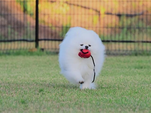 忍犬_d0360206_18535053.jpg