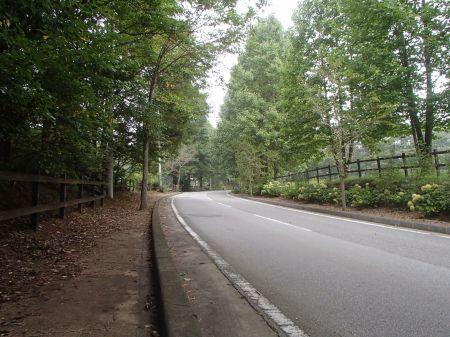 秋景色の始まり_f0064906_11393745.jpg
