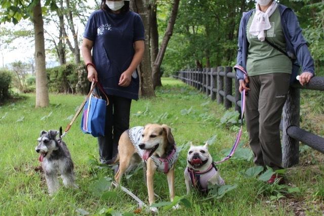 御所野公園でここちゃんとお散歩デート_b0031538_17531609.jpg