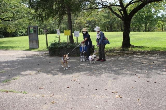御所野公園でここちゃんとお散歩デート_b0031538_18074679.jpg