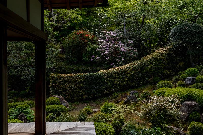 キリシマツツジと春の花咲く三千院_f0155048_20574683.jpg