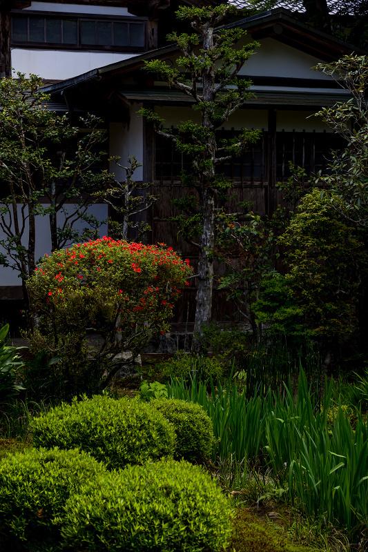 キリシマツツジと春の花咲く三千院_f0155048_20582420.jpg