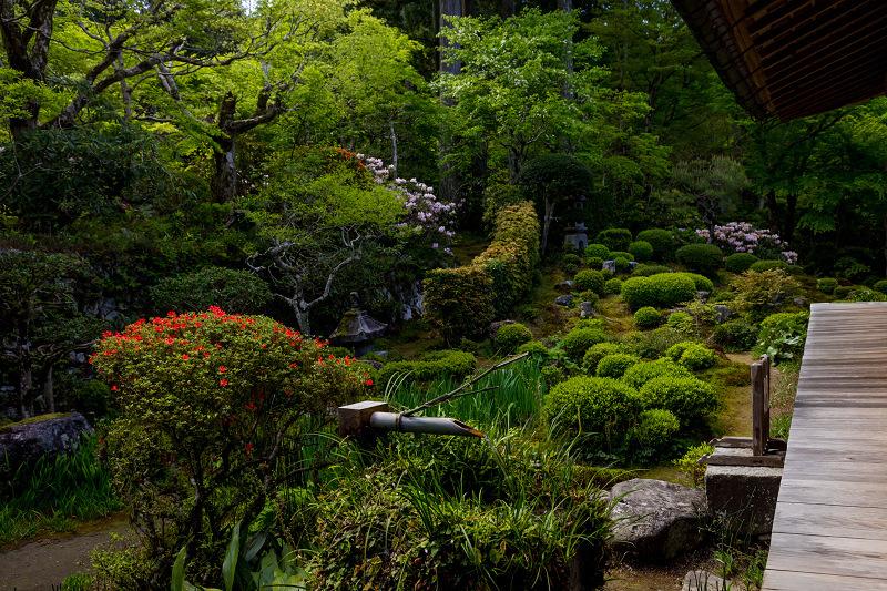キリシマツツジと春の花咲く三千院_f0155048_20584156.jpg