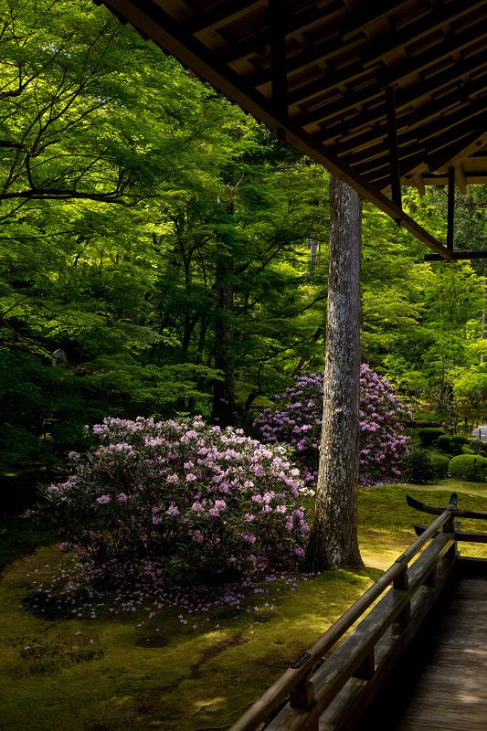 キリシマツツジと春の花咲く三千院_f0155048_20593720.jpg