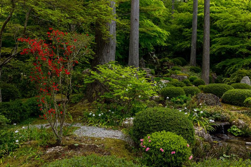 キリシマツツジと春の花咲く三千院_f0155048_21031875.jpg