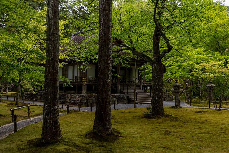 キリシマツツジと春の花咲く三千院_f0155048_21044512.jpg