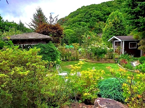 806、白露、秋の庭に花ふたたび_e0323652_12282527.jpg
