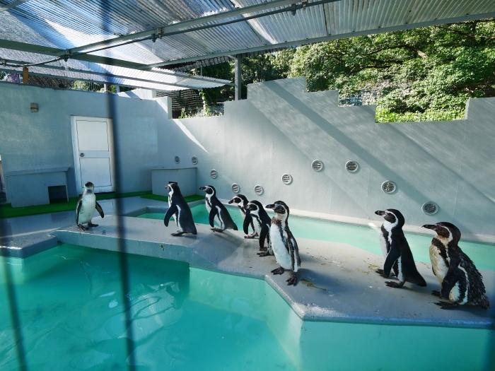 フンボルトペンギン・ワコ  2021-09-16 00:00 _b0093754_23271495.jpg