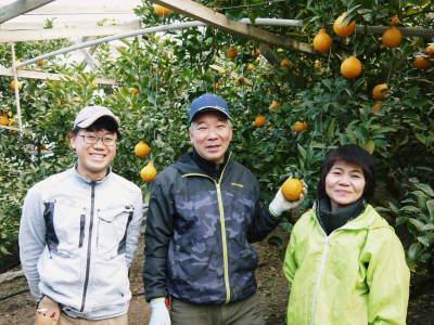 デコポン(肥後ポン) 果実の成長の様子(2021) 来年の花芽となる夏芽も元気に育っています!(前編) _a0254656_19013669.jpg