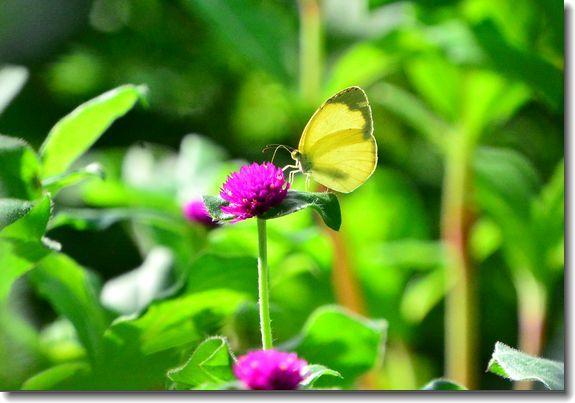 9月の庭2_d0089358_20590041.jpg