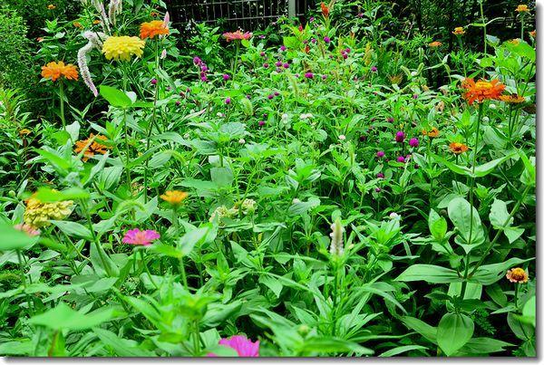 9月の庭2_d0089358_20592288.jpg