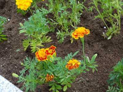 名古屋港水族館前花壇の植栽R3.9.8_d0338682_09334321.jpg