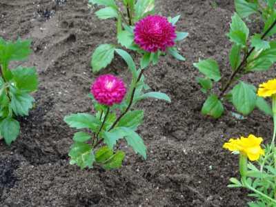 名古屋港水族館前花壇の植栽R3.9.8_d0338682_09341531.jpg