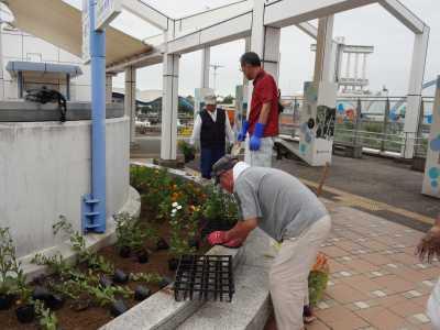 名古屋港水族館前花壇の植栽R3.9.8_d0338682_09360423.jpg