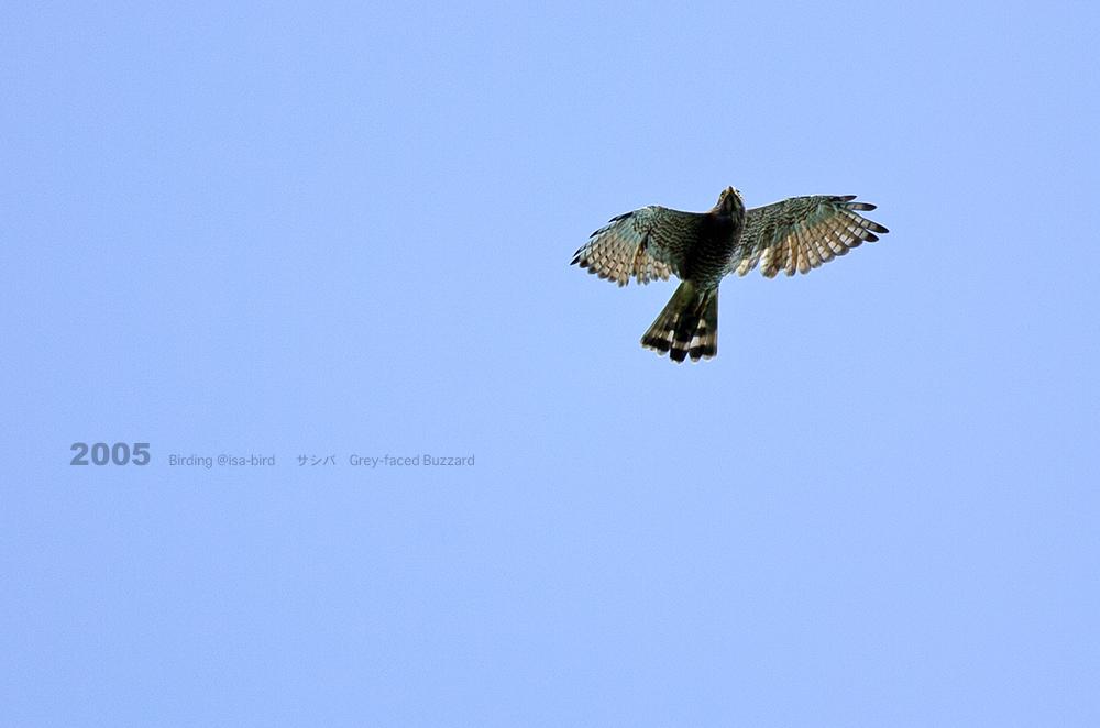 Archive❻ 2005  < 秋 > isa-bird_d0164892_00210666.jpg