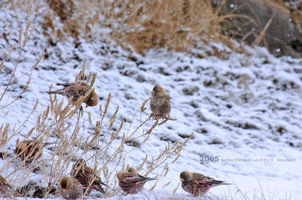 Archive❼ 2005  < 冬 > isa-bird_d0164892_00255416.jpg
