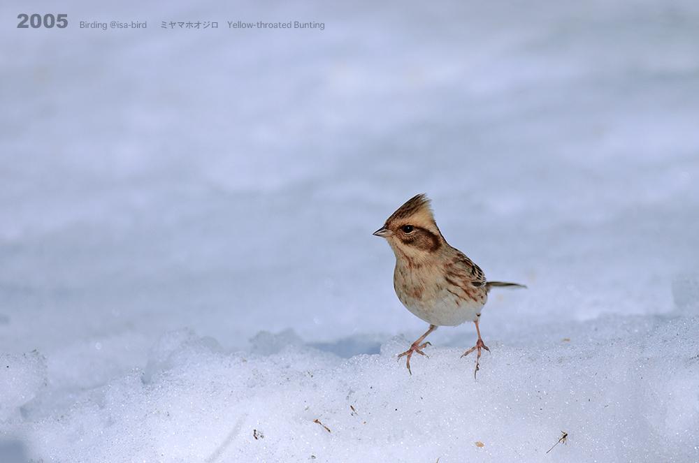 Archive❼ 2005  < 冬 > isa-bird_d0164892_00255522.jpg