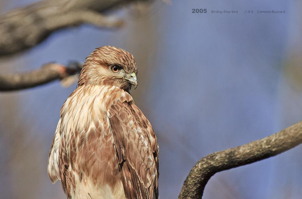 Archive❼ 2005  < 冬 > isa-bird_d0164892_00255532.jpg