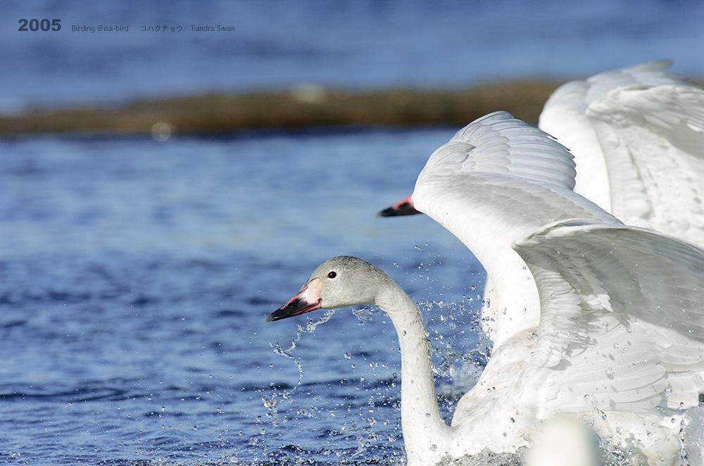 Archive❼ 2005  < 冬 > isa-bird_d0164892_00255578.jpg