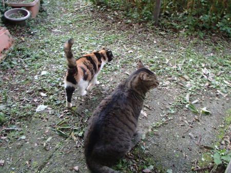何故か一緒の庭散歩_f0064906_19122303.jpg