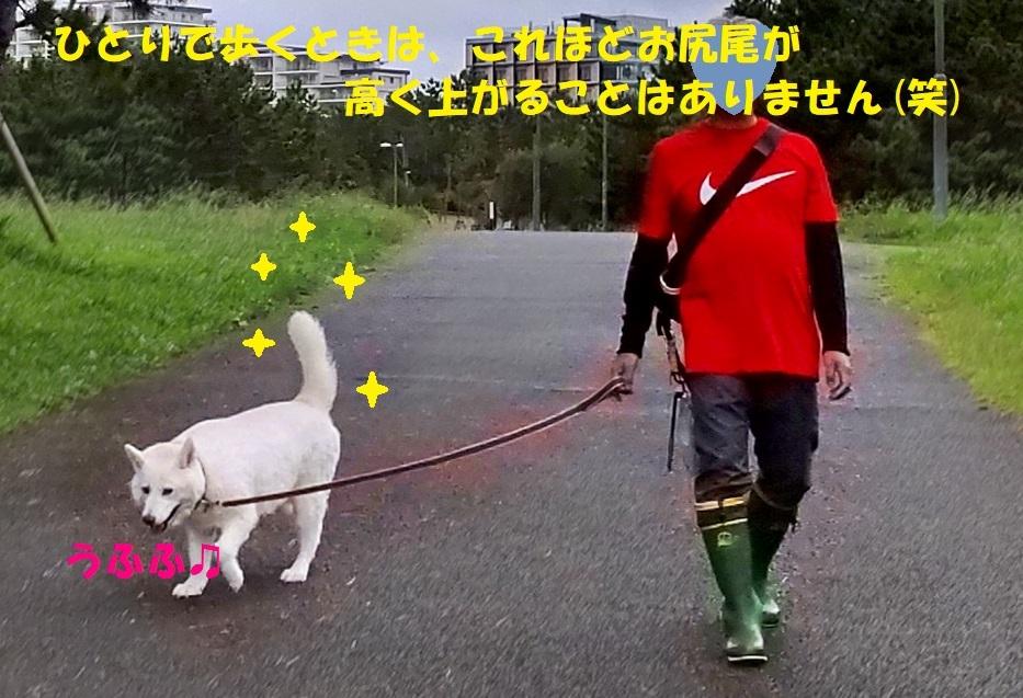 散歩ギライではなかったんだね・・・(~_~;)_f0121712_12541967.jpg