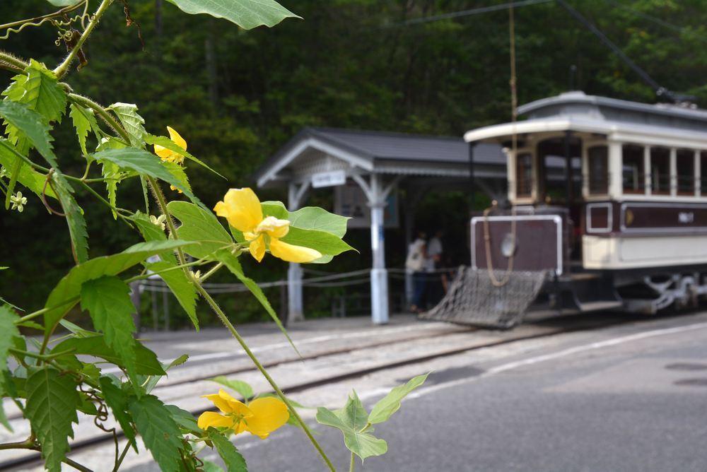 京都市電と夏秋の花_e0373930_19440423.jpg