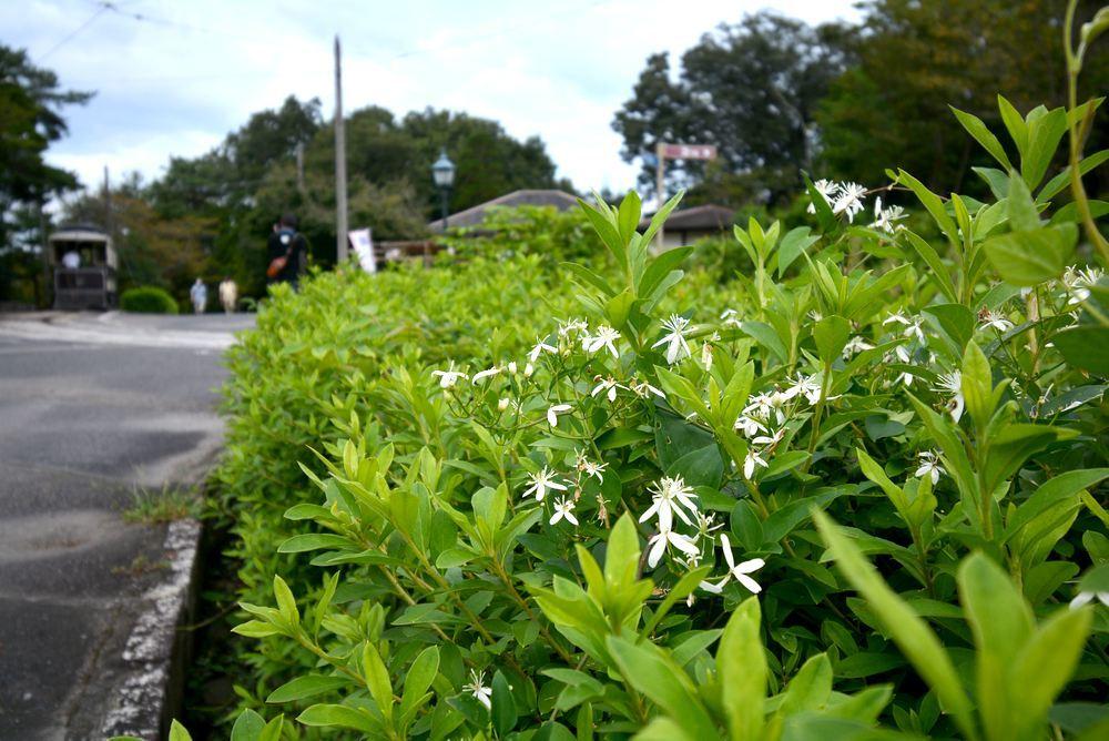 京都市電と夏秋の花_e0373930_19440454.jpg