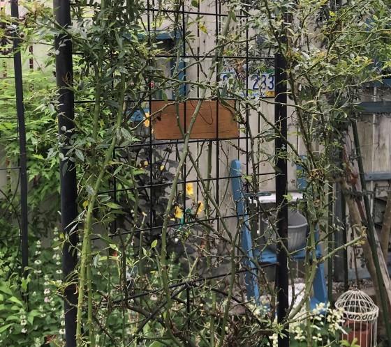 久しぶりに朝から庭いじり~_f0366679_23301550.jpg