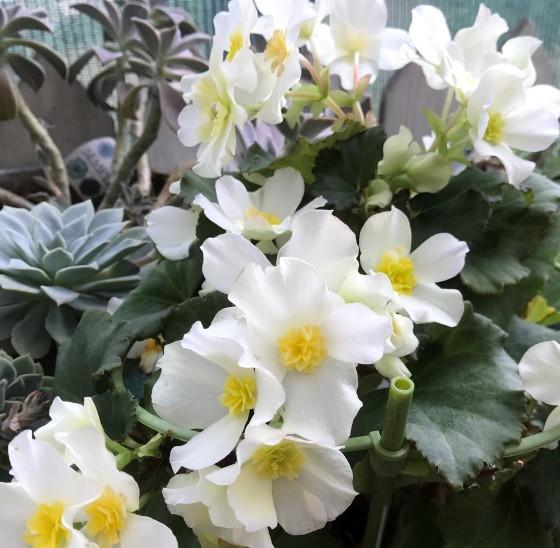久しぶりに朝から庭いじり~_f0366679_23490000.jpg
