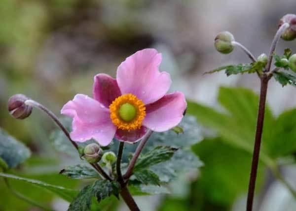 庭の花_c0404426_22000829.jpg
