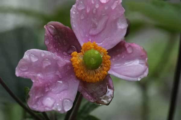 庭の花_c0404426_22024991.jpg