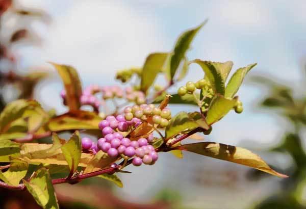 庭の花_c0404426_22223151.jpg