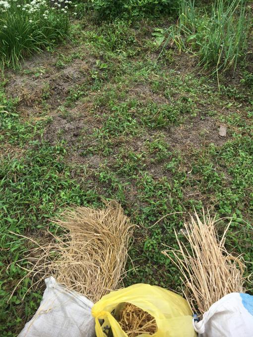 畑です。畝作りです。_f0182246_21153026.jpg