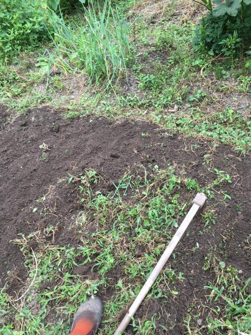 畑です。畝作りです。_f0182246_21155993.jpg