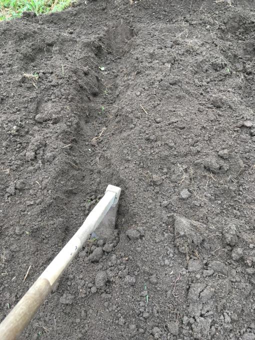 畑です。畝作りです。_f0182246_21161970.jpg