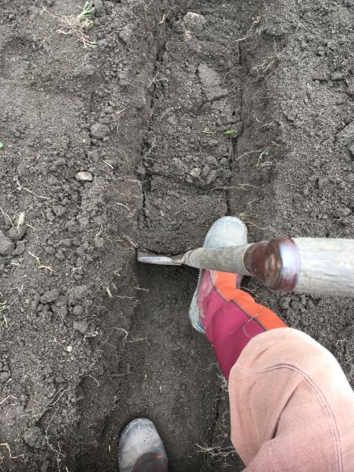 畑です。畝作りです。_f0182246_21165089.jpg