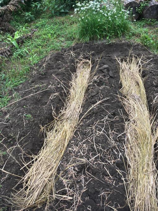 畑です。畝作りです。_f0182246_21175078.jpg
