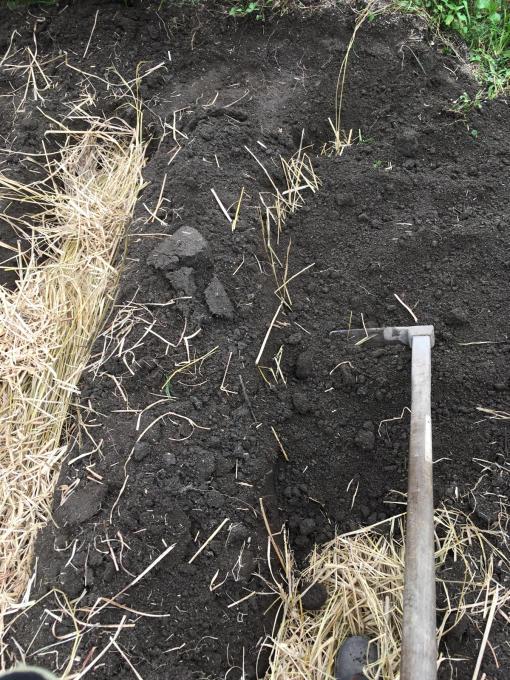 畑です。畝作りです。_f0182246_21184418.jpg